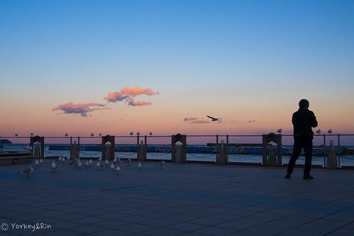 winter sunset japan photographer january olympus shizuoka 冬 rin 親水公園 atami 夕焼け eveningglow 2016 blackheadgull 静岡県 em5 ユリカモメ 写真を撮る人 1月 熱海市 lumixg20f17 shinsuipark pc239001