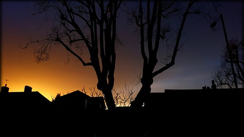 trees sunset sky clouds silhouettes moodyclouds darkandgloomy moodysunset treeswithnoleaves