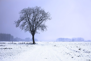 Solitary snow tree   by Lenny K Photography