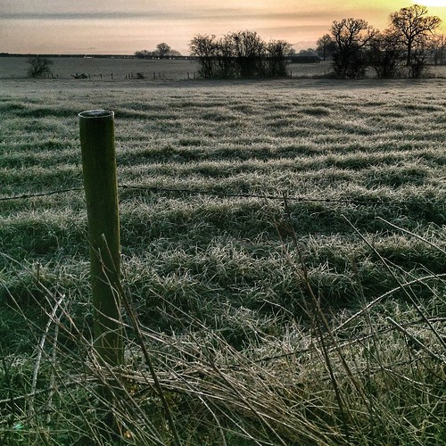 tree sunrise countryside frost outdoor fields twycross 366 a444 scottsimpson iphone6