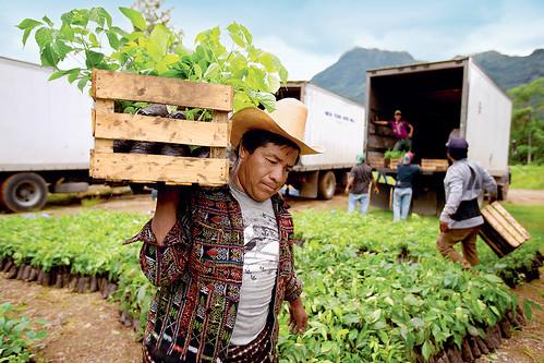 Nespresso agro-forestry programme | by Nestlé