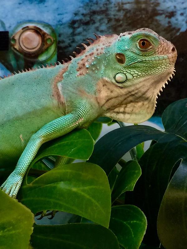 Reptile at Petco