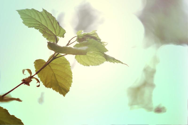 blur-dreamy-texture-texturepalace-52