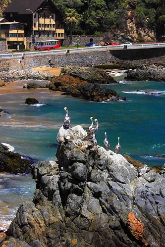 blue sea bird rock azul mar pássaro ave pedra