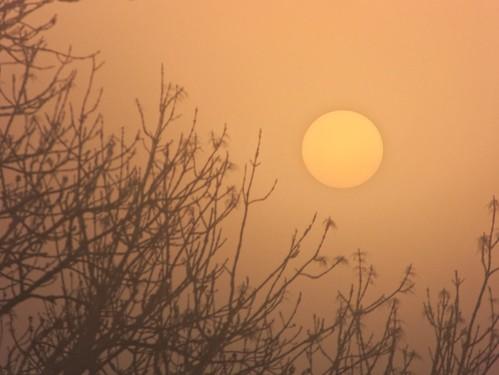 sky sun yellow fog sunrise landscape soleil brouillard brume siel
