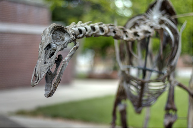 Struthiomimus, Earth Science Department, Tennessee Tech University 1