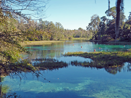 park trees water river landscape scenery florida springs dunnellon aquaticvegetation
