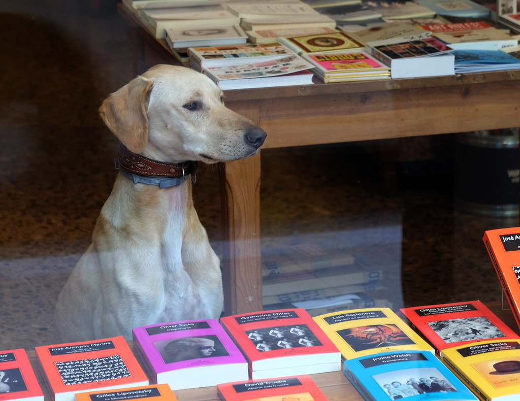 Well read dog