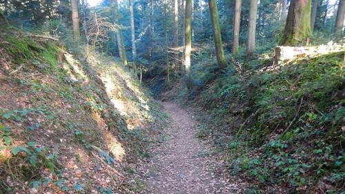 forest schweiz switzerland nikon europa suisse che bäume weg pfad historisch forst nikonshooter myswitzerland nikonuser nikonlover s9600 nikonschweiz viewnxi