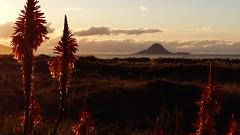 Moutohora Island
