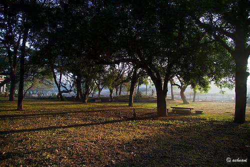 trees india nature sunrise lalbagh d610 24120mm bengaluru