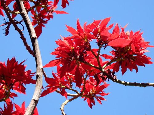 Jocotepec - Roca Azul - bloem