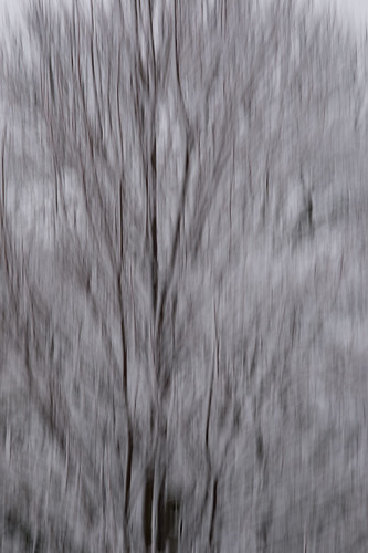 trees winter snow abstract monochrome nationalpark snowstorm valleyforge