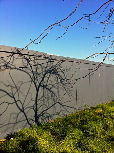 blue fence sunshine sunshinepc3020 melbourne victoria australia shadow light grey green tree winter sunshinemarketplace greyfence treeshadow lifght winterlight hidden shadwos shadows auspctaggedpc3020 australiannewtopographics newtopographics topographies trove australiainpictures troveaus unfound tmblrpc3020 art vertical