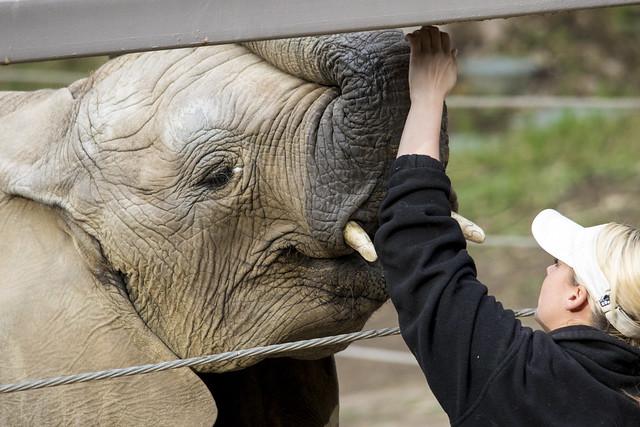 Elephant Keeper Talk