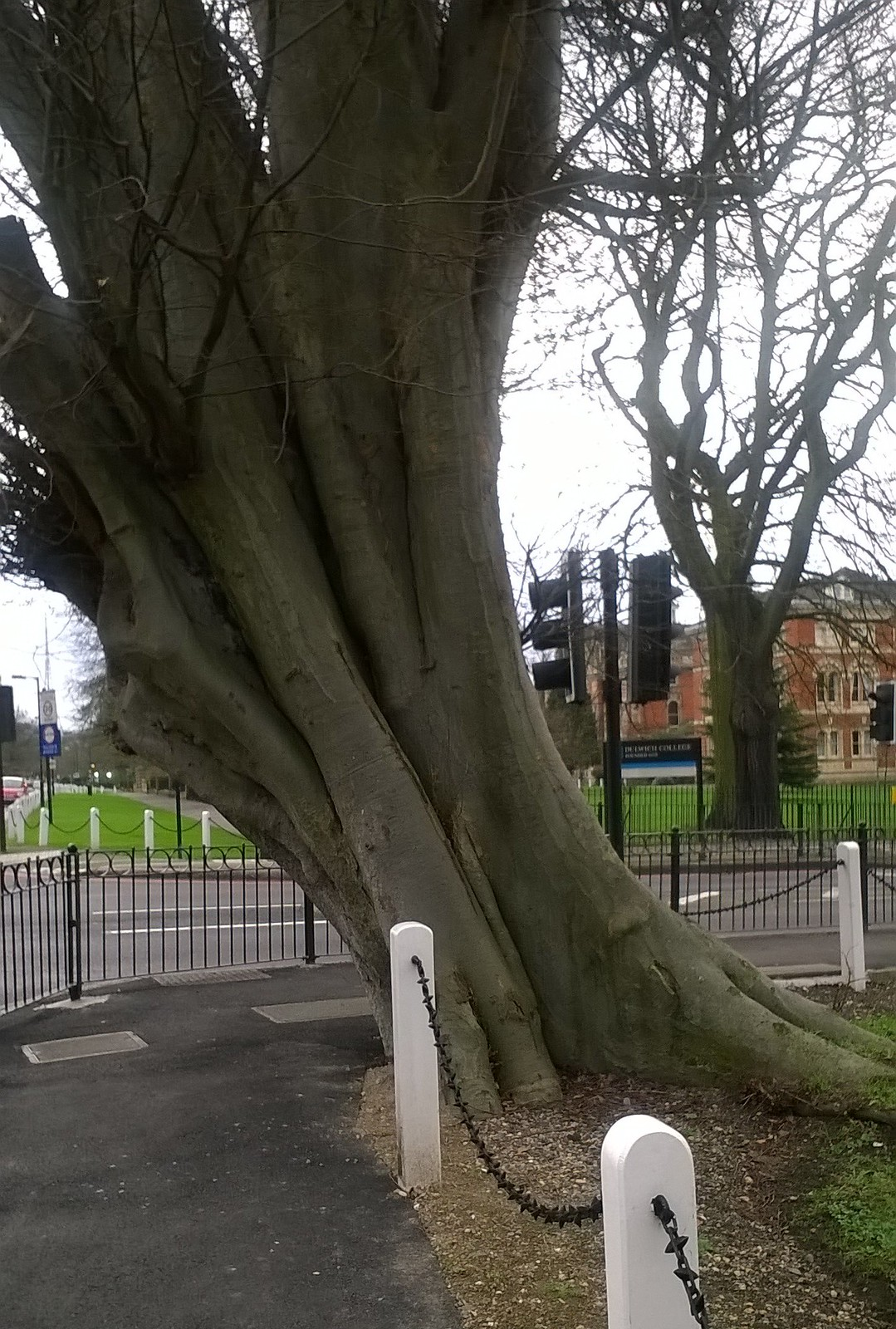 Leaning tree of Dulwich Opposite Dulwich College