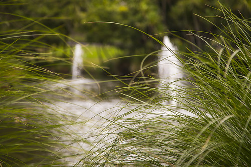 grasses | by chriswaynzpics