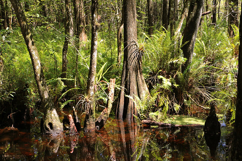 park wood trees light shadow parco usa brown fern reflection tree green nature water america forest woodland landscape us pond day unitedstates natural vivid natura swamp acqua paesaggio statiuniti naturale andreamoscato