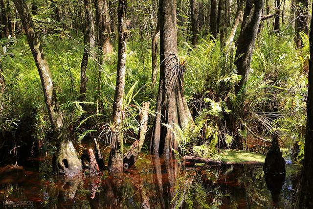Six Mile Cypress Slough Preserve - Florida