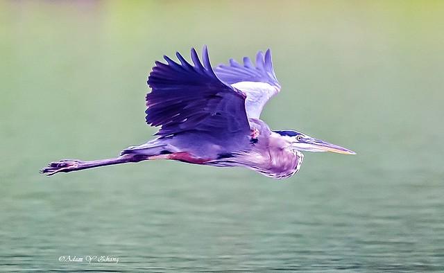 Elegant Flying Style ( 典雅飞行 )