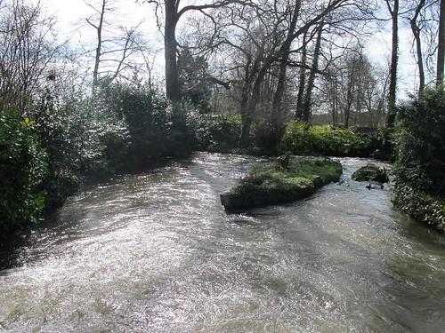 Test River, from bridge within Mottisfont Abbey Gardens SWC Walk 58 Mottisfont and Dunbridge to Romsey taken by Karen C.
