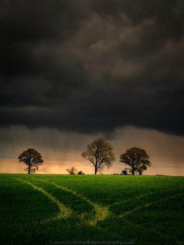 trees sky sunlight tree field clouds landscape crop landscapephotography