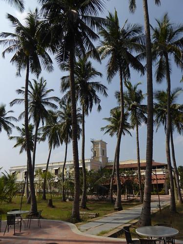india tree palmtree tamilnadu chidambaram