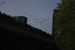 Bats! | by poobou