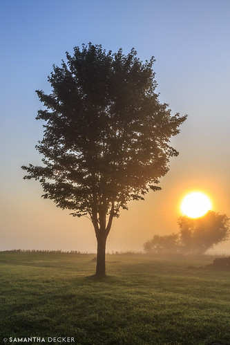 morning mist ny newyork tree sunrise nps upstate stillwater saratogabattlefield canonef24105mmf4lisusm saratoganationalhistoricalpark canoneos6d samanthadecker neilsenfarm