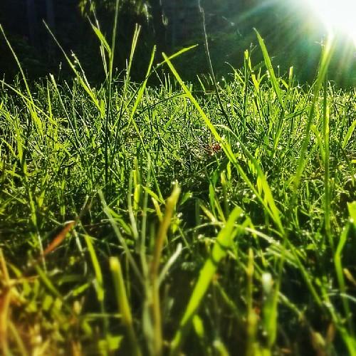 sunrise earlymorning dew snapseed uploaded:by=flickstagram kenya365 instagram:photo=614237625486469160227669921 instagram:venuename=awayfromeverything instagram:venue=181543609