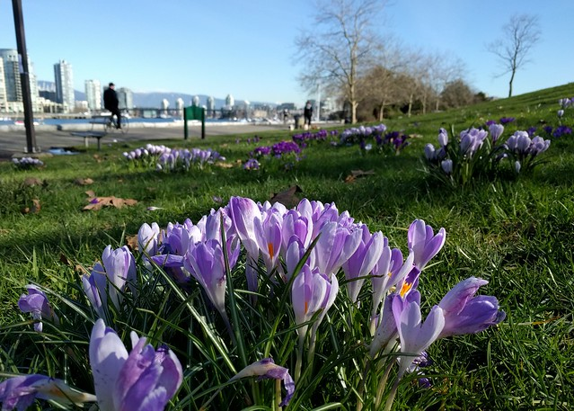 Springtime on the sea wall