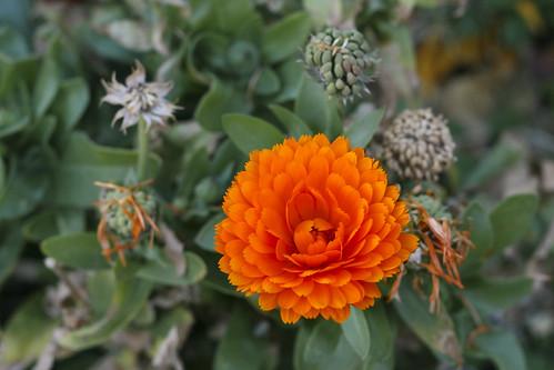 arizona orange flower canon tucson orangeflower firstphotos age11 2016 anavey tucsonrockandgemshow xti canonrebelxti anaveybolender
