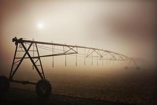Morning fog on Delaware farm   by Michele Dorsey Walfred
