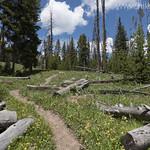 Observation Peak Trail