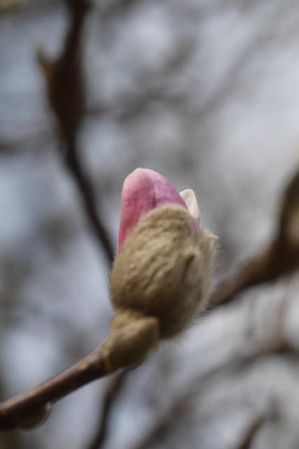 金, 2016-03-11 13:16 - Brooklyn Botanic Garden