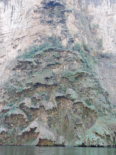 Canon del Sumidero - mos in vorm van kerstboom