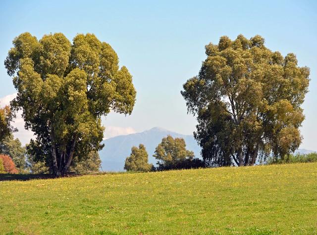 Il monte Gennaro tra gli eucalipti della campagna romana