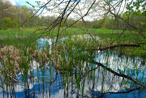 Pond & Forest | by wackybadger