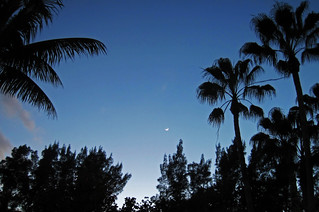 Crescent Moon & palms | by James St. John