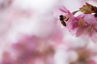 春のしあわせ | by hiroching