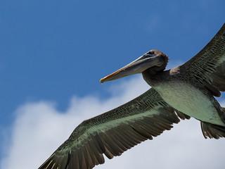 Big Bird Overhead | by ramcewan