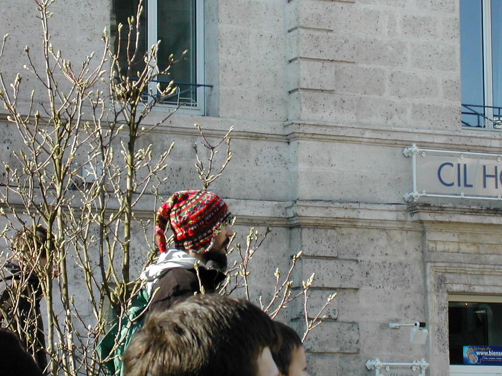 gnome in a tree