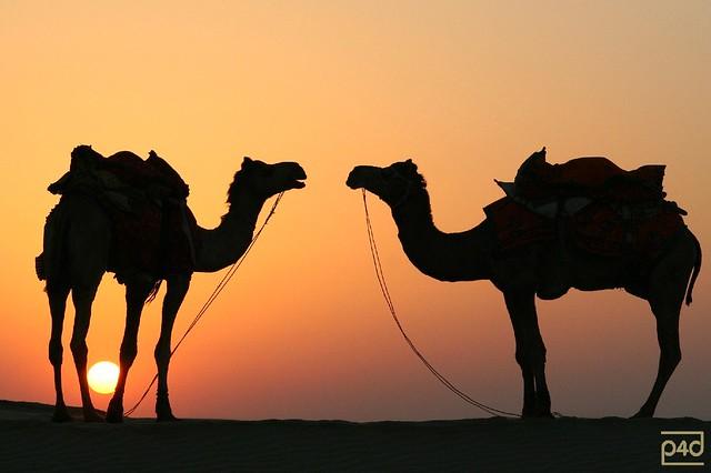sunset in the rajasthan desert