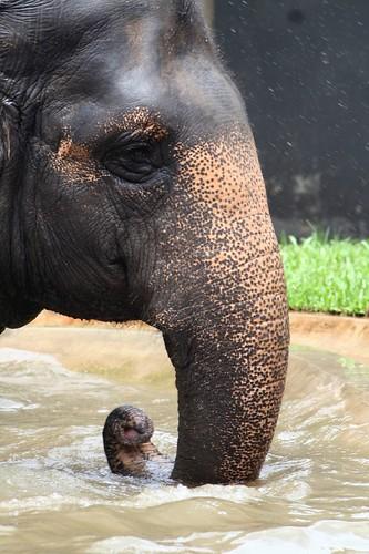ELEPHANT   by SJ  photography