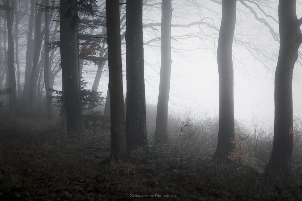 Для хотя чтобы окажись в необычном лесу а начать увлекательное путешествие нельзя просто нажать на спин и запустить обычное вращение барабанов. палеоэкологам мере насладиться красотой неповторимостей