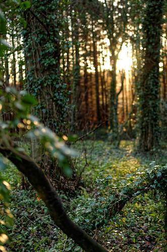 wrexham coedpoeth winter 2016 nikon d7000 dxo dawn sunrise sun northwales trees a525 wood copse dof 500px