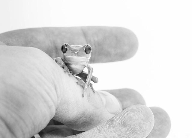 Frog / explore 22/03/16