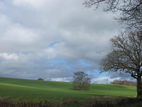 Lone Tree in Field, near Carter's Clay SWC Walk 58 Mottisfont and Dunbridge to Romsey taken by Karen C.