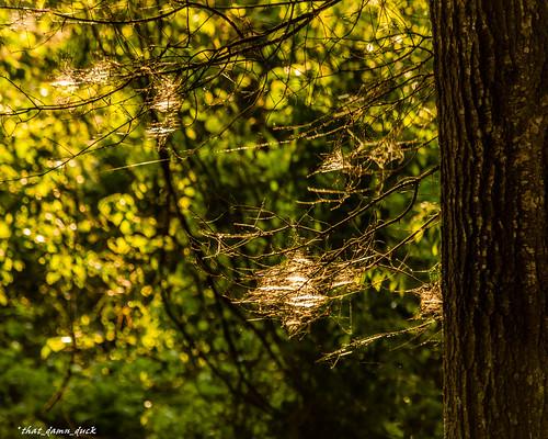sunset nature sundown spiderweb