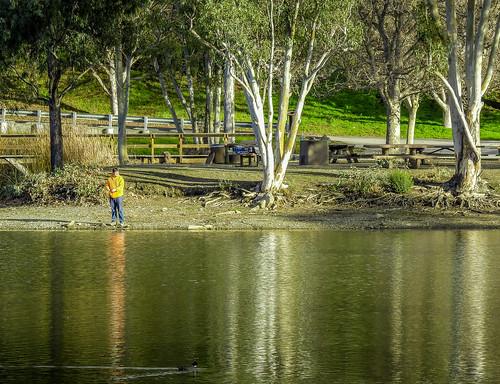 california park ca trees lake man green water yellow fishing afternoon outdoor stock losgatos vasonalakecountypark